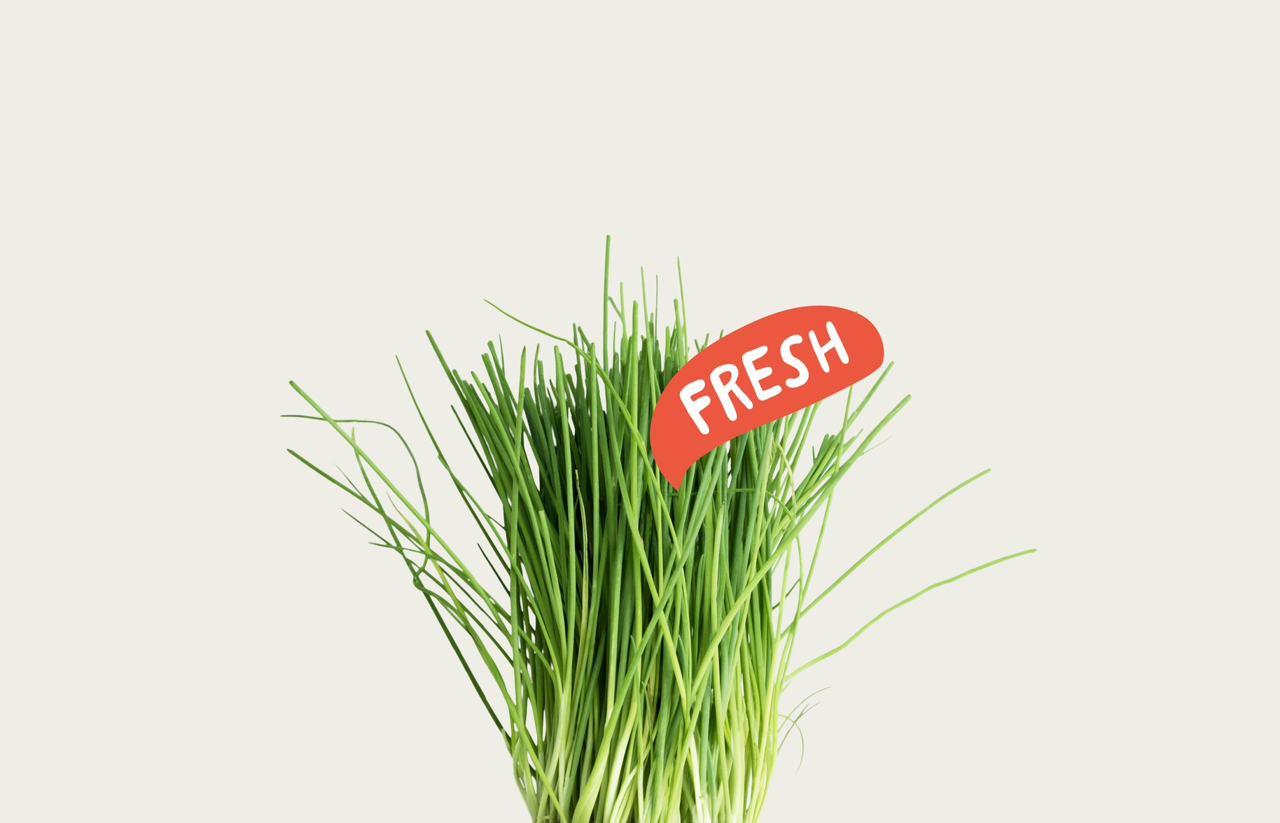 Superb Herb Fresh Chive Photograph and Graphic