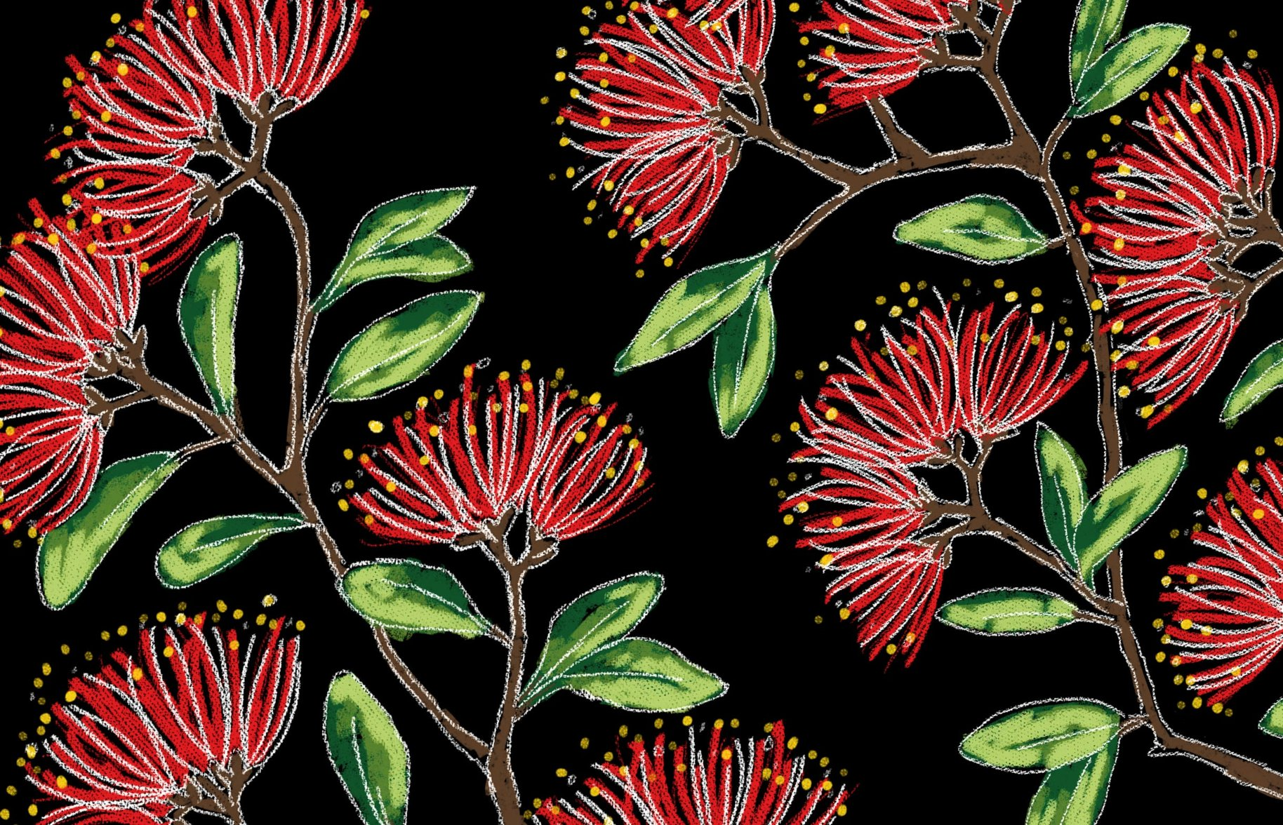 Donovans Chocolate seasonal release pohutukawa illustration